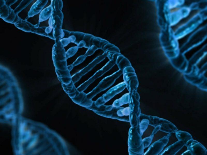 Co je epigenetika