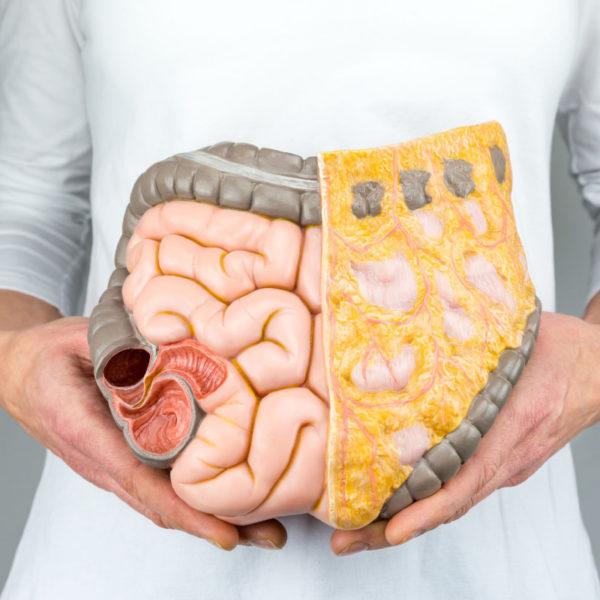 Tajemný svět uvnitř našich střev: Bakterie ovlivňují naše zdraví i genetickou informaci