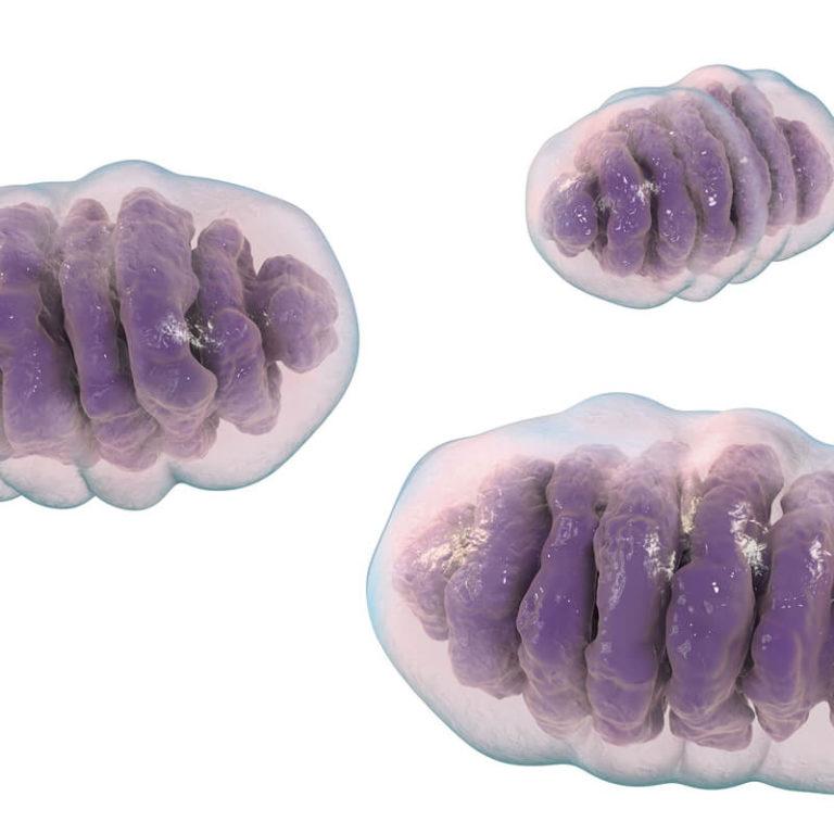 Chcete zhubnout? Podpořte své mitochondrie!