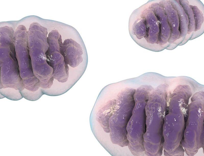 epivyziva-chcete-zhubnout-podporte-sve-mitochondrie-28042021